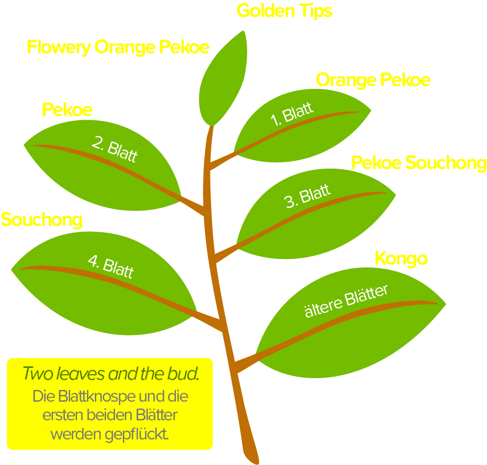 Teezweig und die namen der Teeblätter